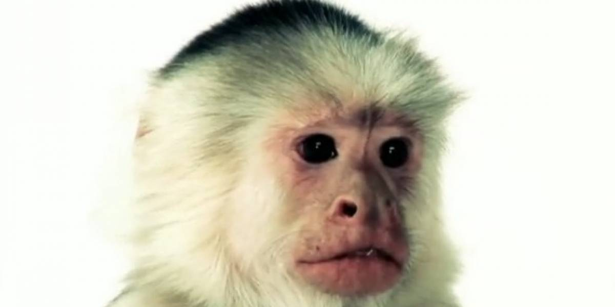 Un mono te enseña a cambiar la tarjeta de video
