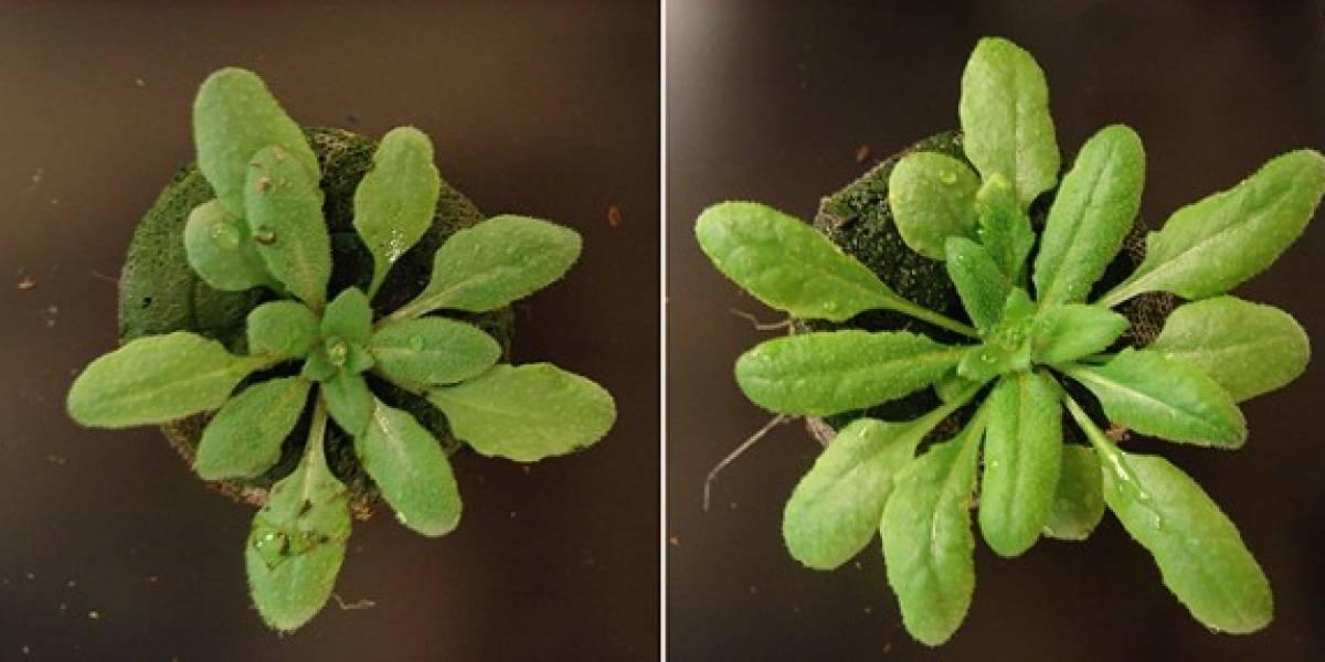 Según científicos las plantas también socializan