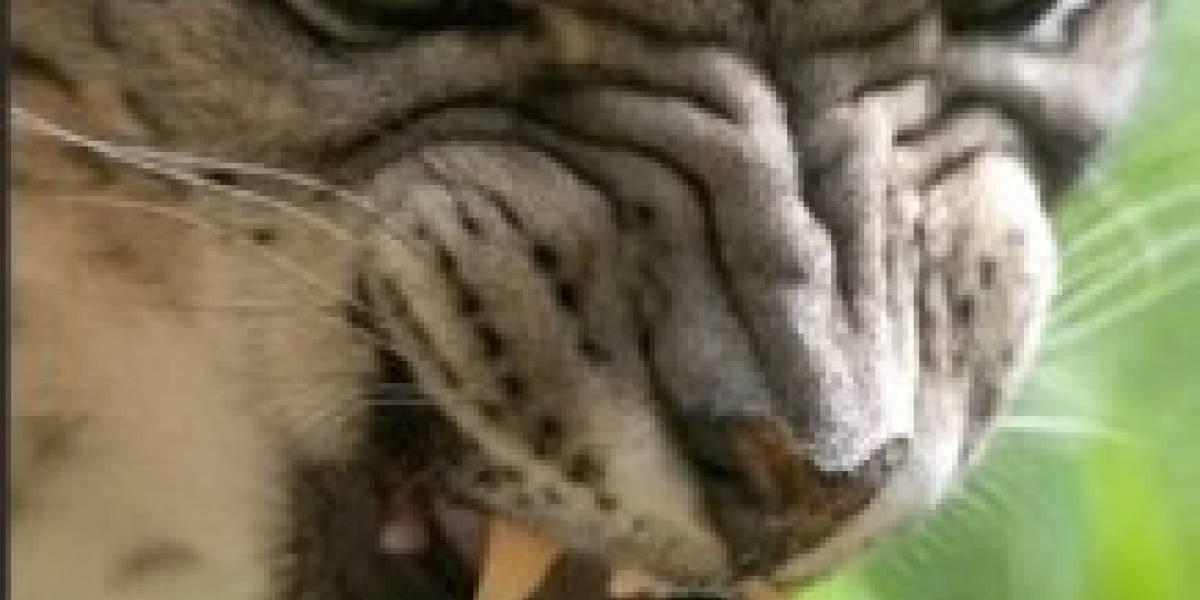 Snow Leopard 10.6.2 vuelve a eliminar soporte para Intel Atom
