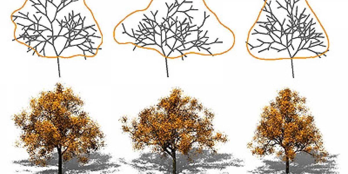 Programa genera árboles automáticos usando imágenes de la realidad