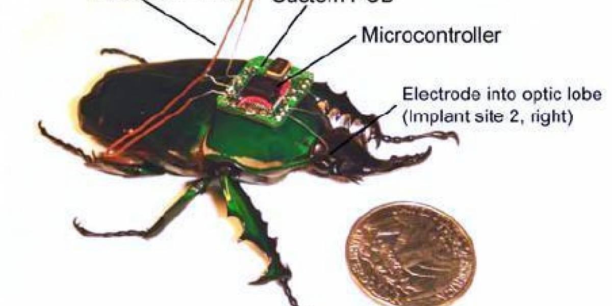 Ciborg-insectos de control remoto ya son una realidad