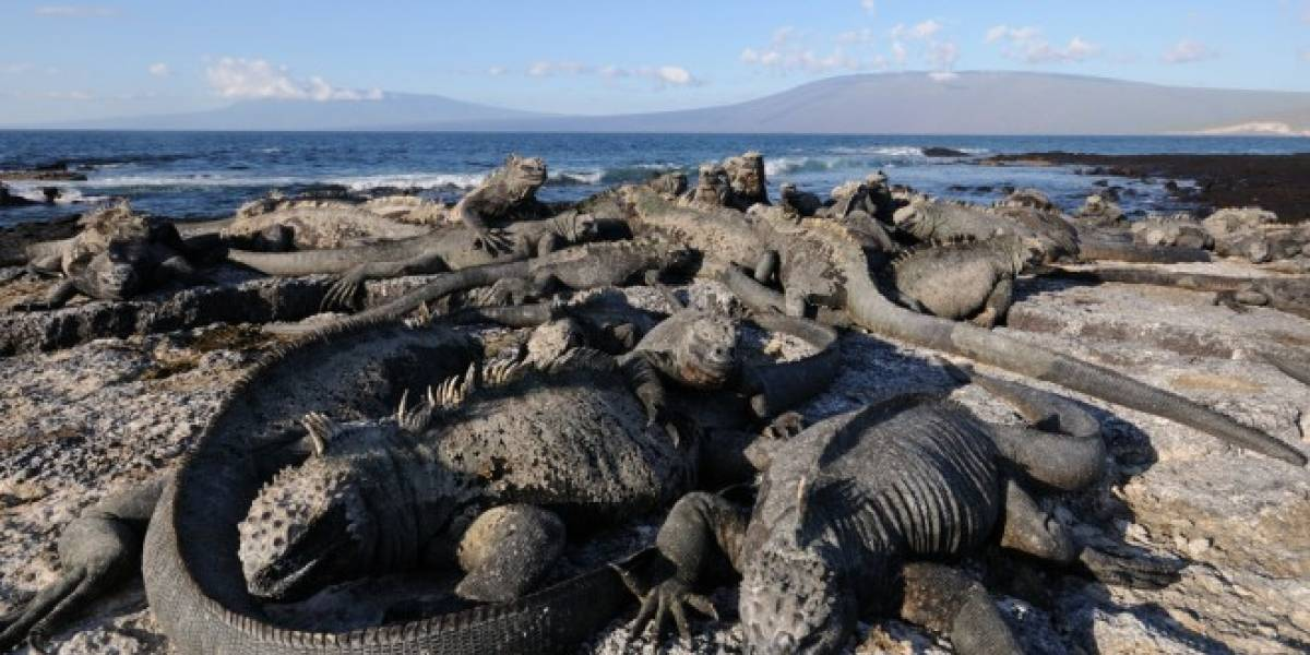 Galápagos tendrá Internet gratis