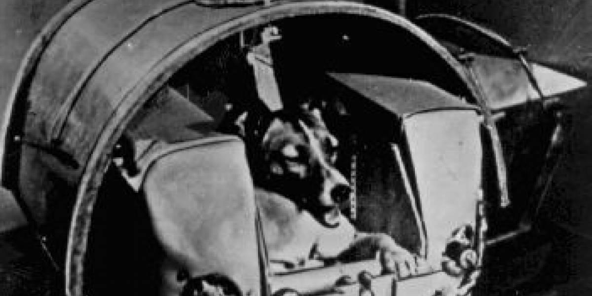Hace 52 años el primer animal vivo orbitó la Tierra