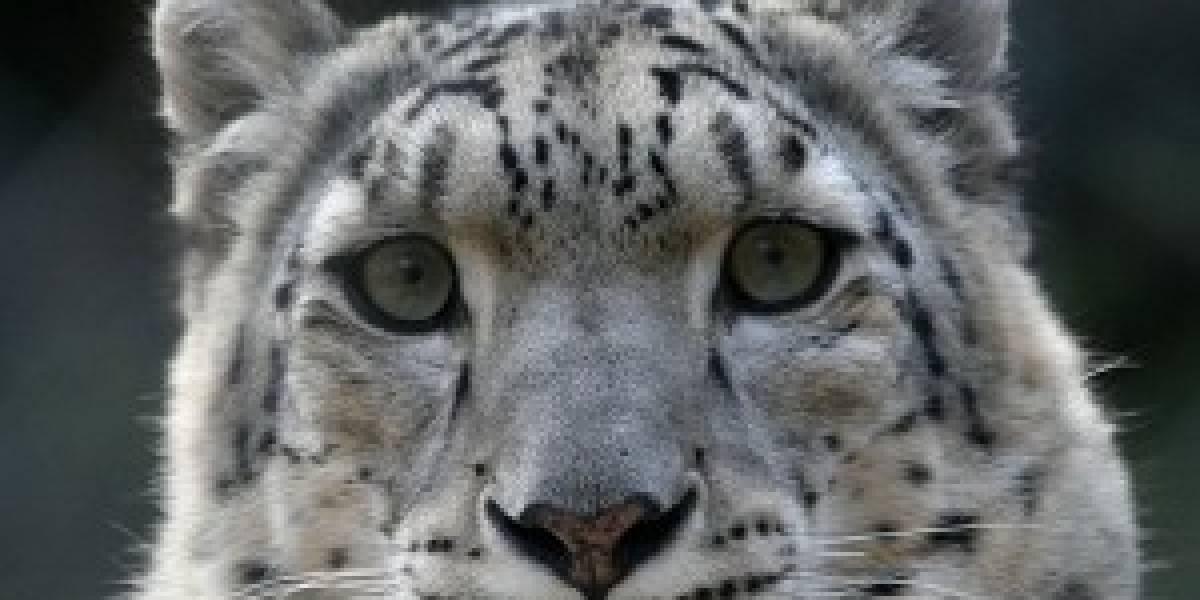 Snow Leopard borraría todos los datos al iniciar sesión como invitado
