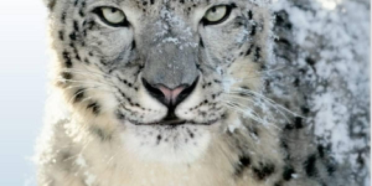 Snow Leopard sería más inseguro que Windows 7