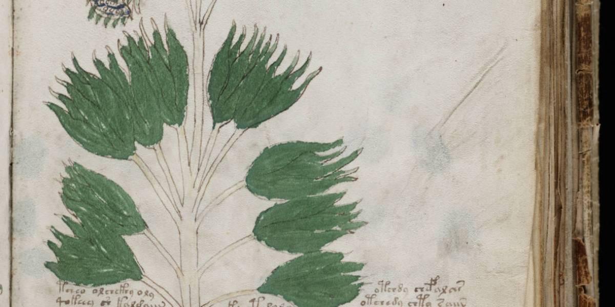 Manuscrito Voynich posiblemente decodificado