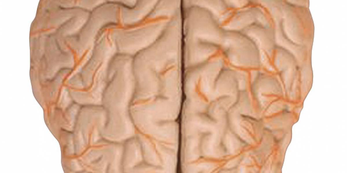 Estudio revela dos niveles de corrección de errores en cerebro