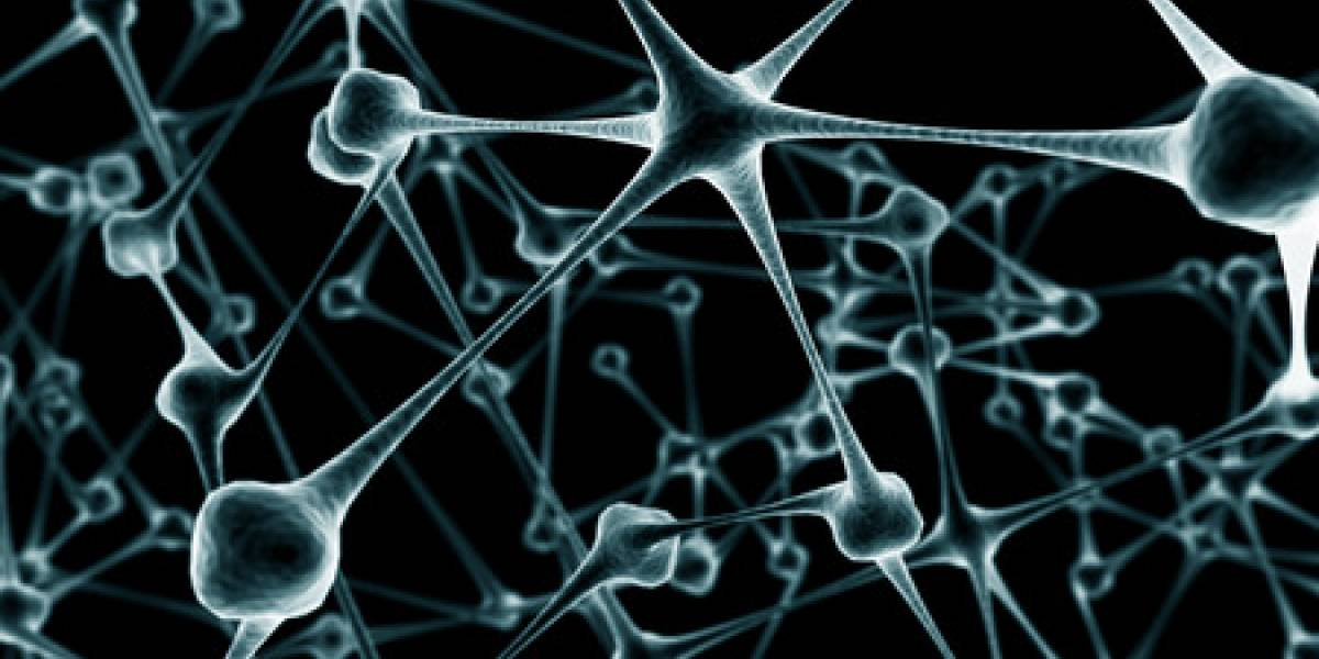 Funcionamiento del cerebro parecido al de Internet