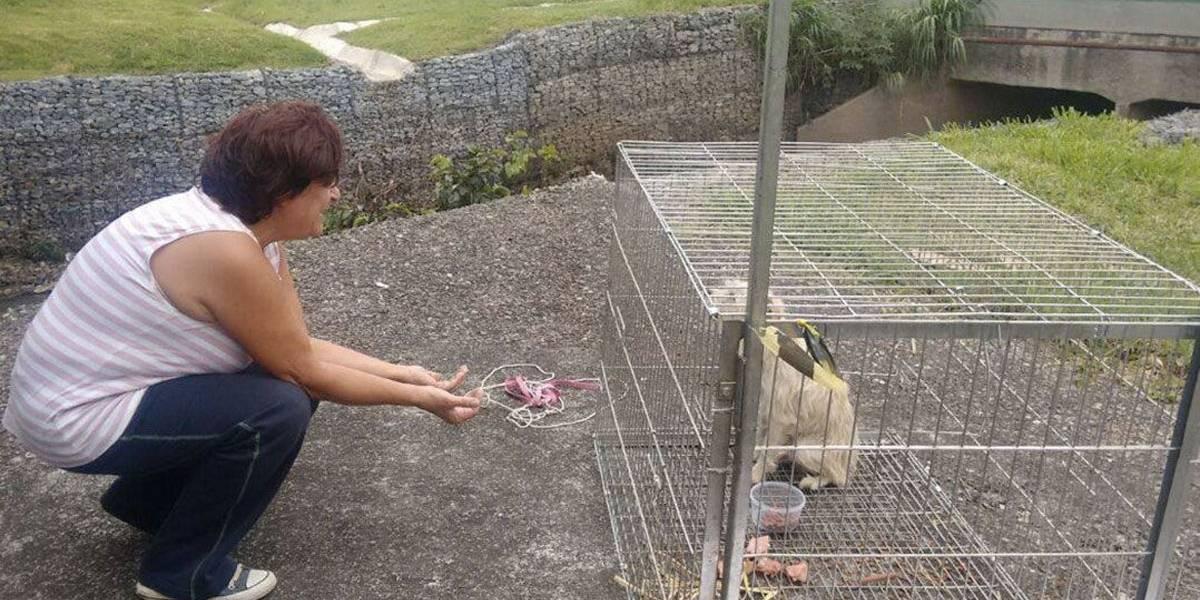 Cadela é resgatada após ficar 5 meses 'ilhada' no canteiro central da Anchieta