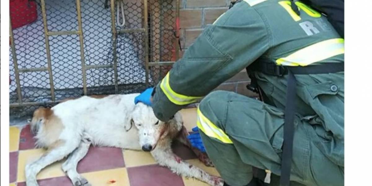 No solo murieron policías, también los perritos fuero víctimas de los atentados en Barranquilla