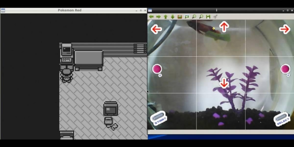 Mira a este pez jugar Pokémon en Twitch