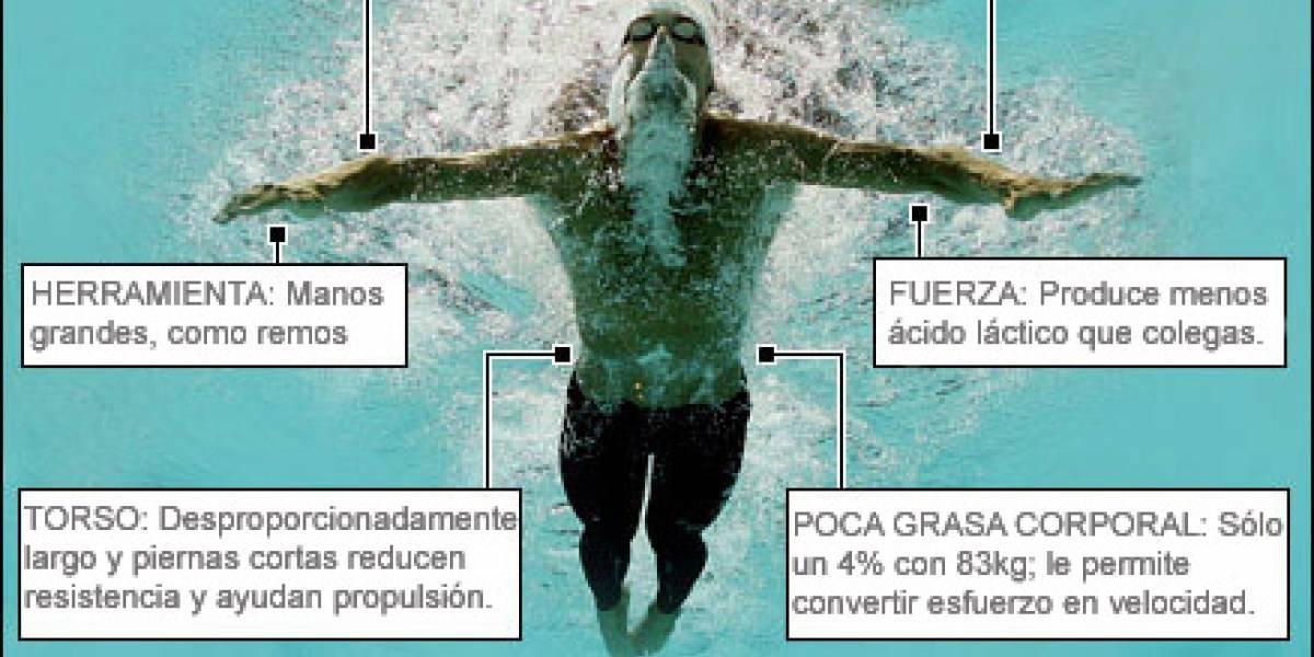 Analizando el cuerpo de Michael Phelps