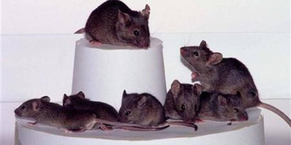 Científicos clonan ratones congelados, mamuts en cola de espera (?)