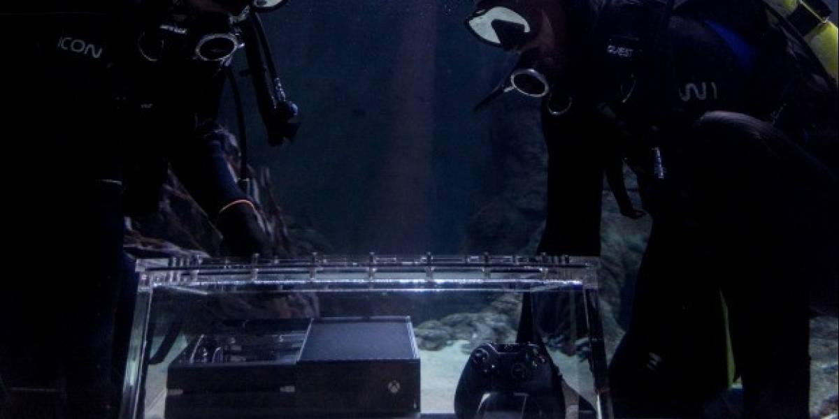 Las primeras Xbox One están siendo cuidadas por tiburones en Nueva Zelanda