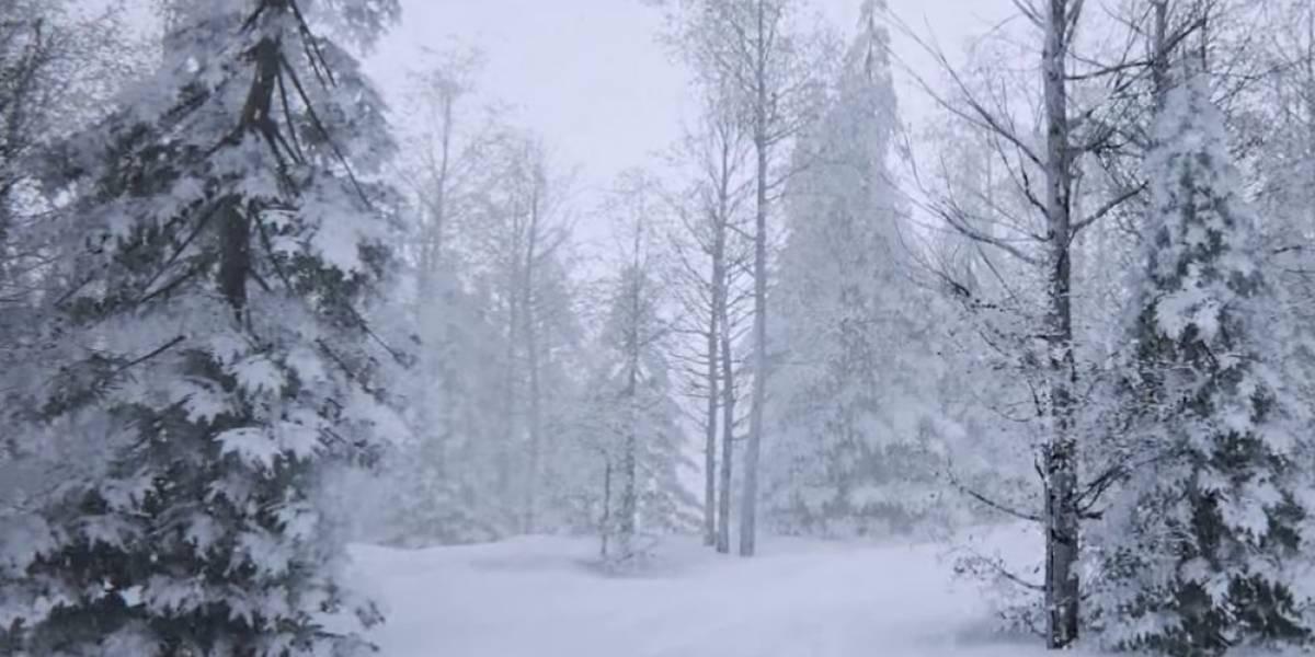 Mira esta espectacular demostración en video de un bosque en Unreal Engine 4