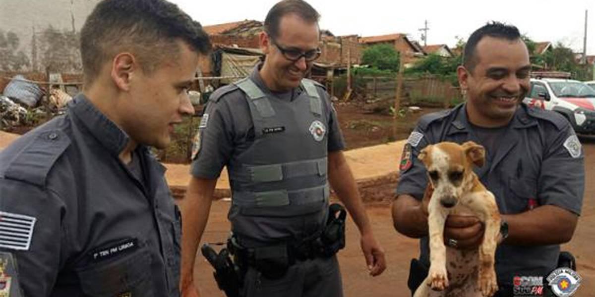 Cachorro cai em bueiro e é resgatado por policiais no interior de São Paulo