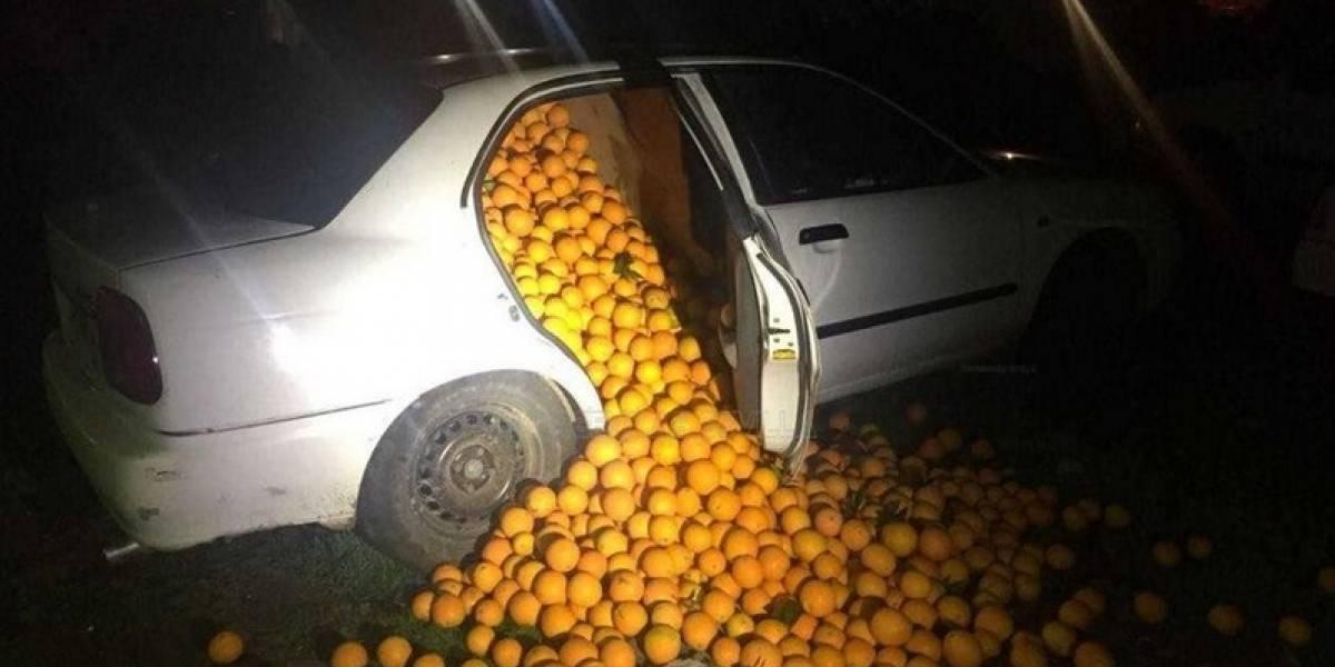 """""""Veníamos de lejos y las recogimos en el camino"""": la particular excusa de sujetos que robaron 4 mil kilos de naranjas"""