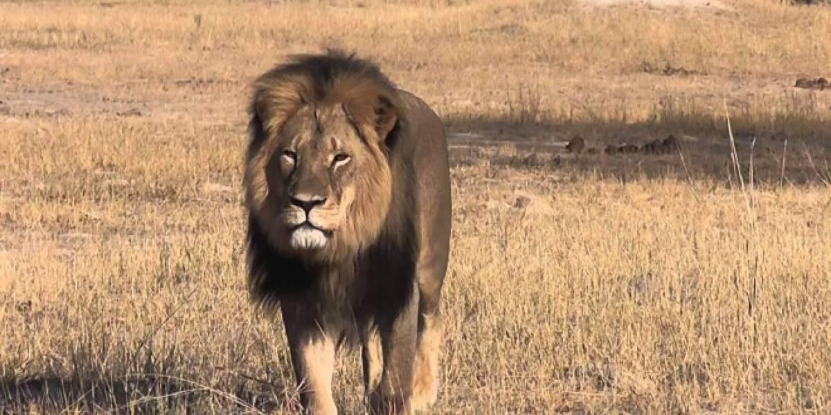 HTC One M9 con baño de oro serán vendidos para ayudar al hogar del león Cecil