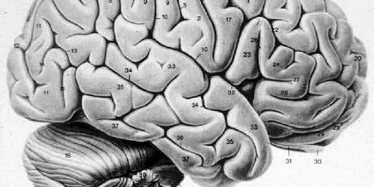 Aplicar una pequeña corriente al cerebro hace pensar diferente
