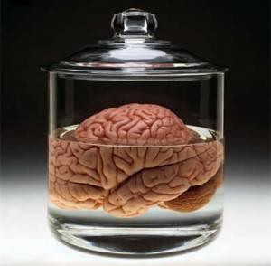 Tener un cerebro más grande te hace solamente un poco más inteligente