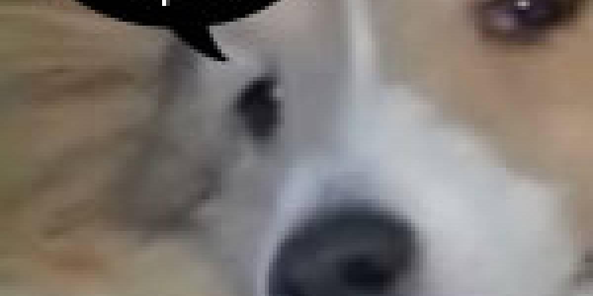 Insólito: Maté a mi Perro con una Wii! OMFGWTFROFLMAO!!