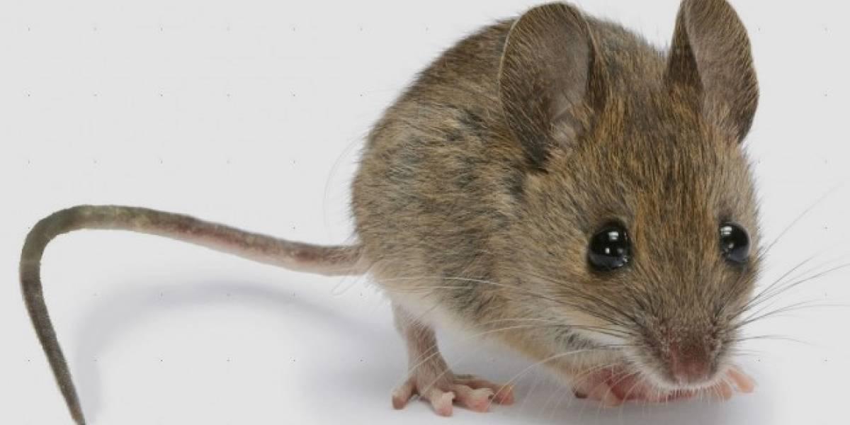 Este chip de IBM haría que tu smartphone sea tan listo como un ratón