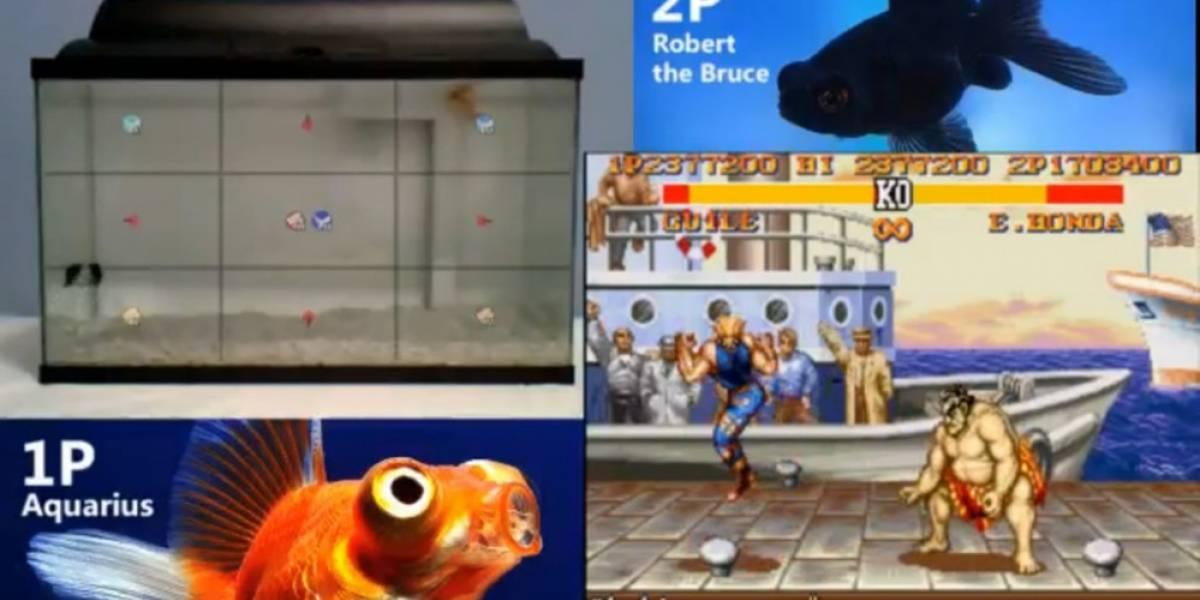 Mira a dos peces jugar Street Fighter en Twitch