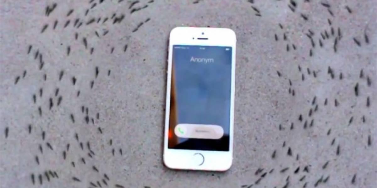 Así reaccionan las hormigas a la radiación electromagnética de un iPhone
