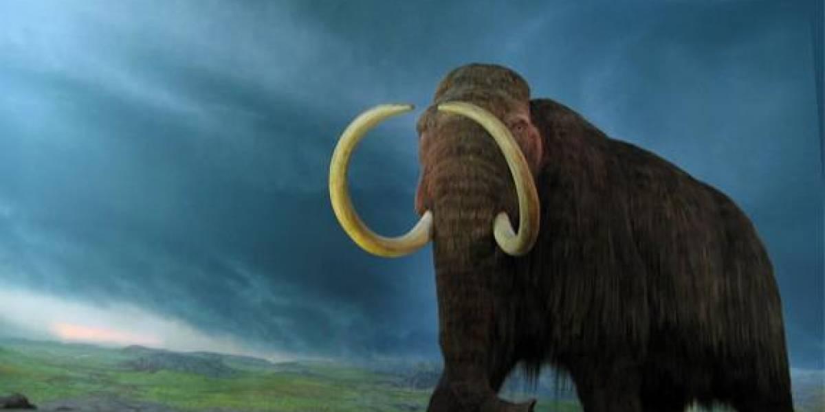 Científicos logran notable avance en investigación celular para revivir al mamut
