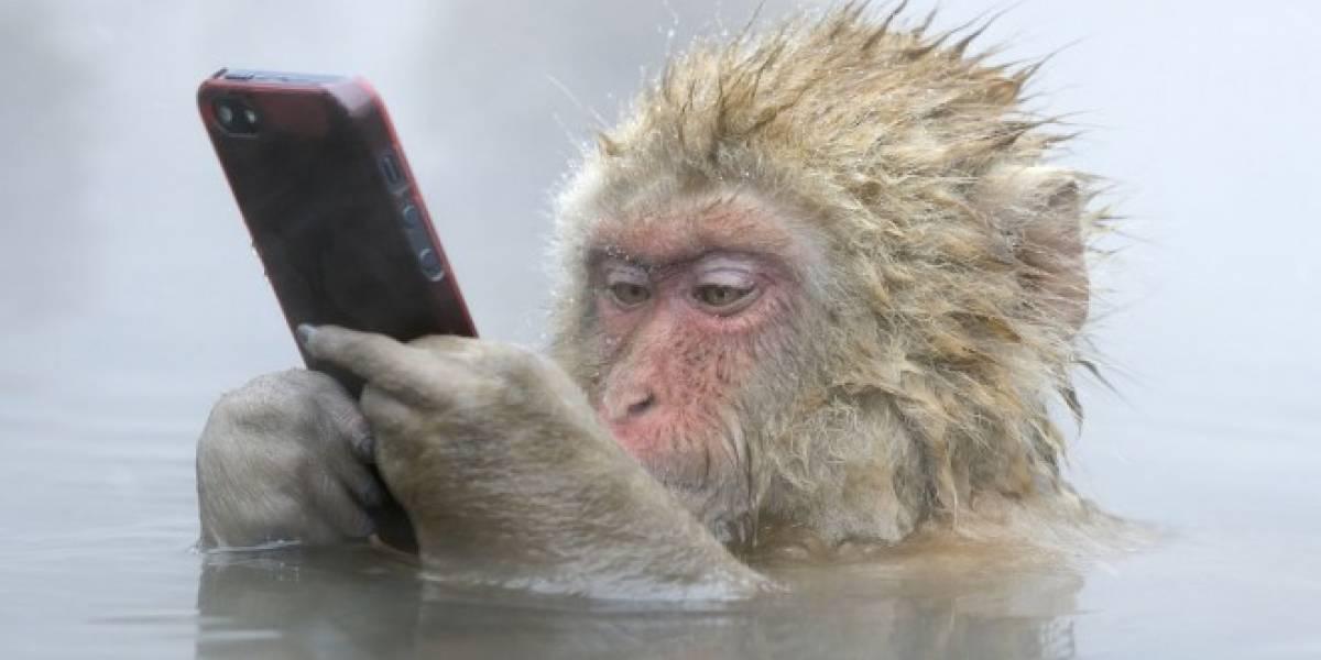 Notificaciones móviles aumentan hiperactividad y falta de atención