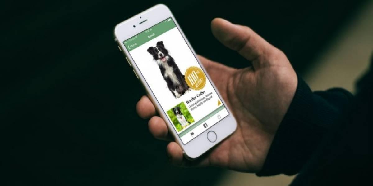 Esta app de Microsoft te dice cuál es la raza de tu perro