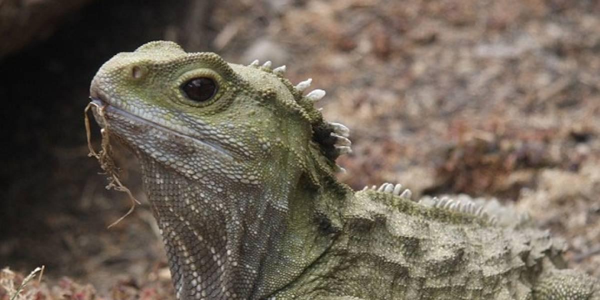 Los reptiles españoles inspiran una guía iOS