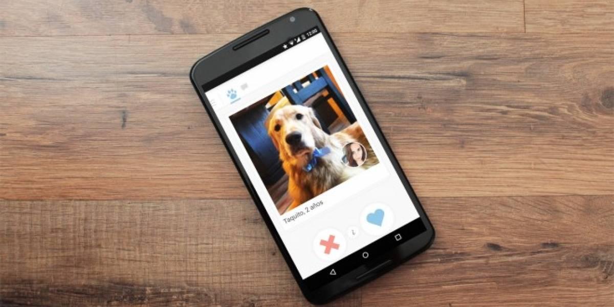 Tindog es el Tinder para los perros
