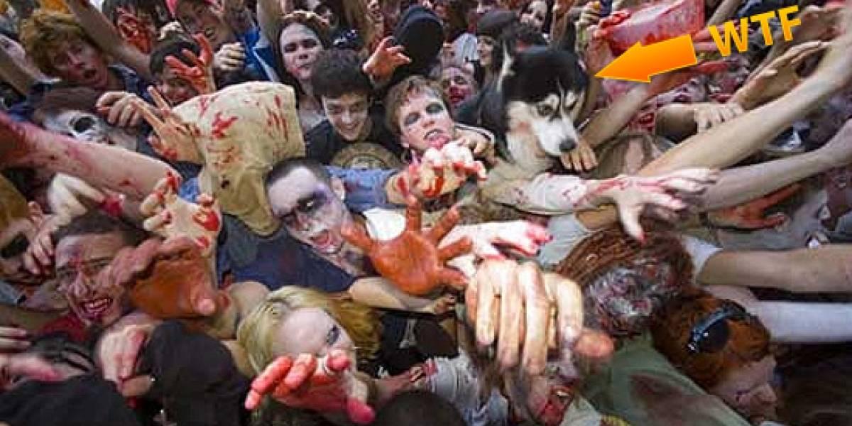GDC09: Dead Rising 2 tendrá 6.000 zombies en pantalla