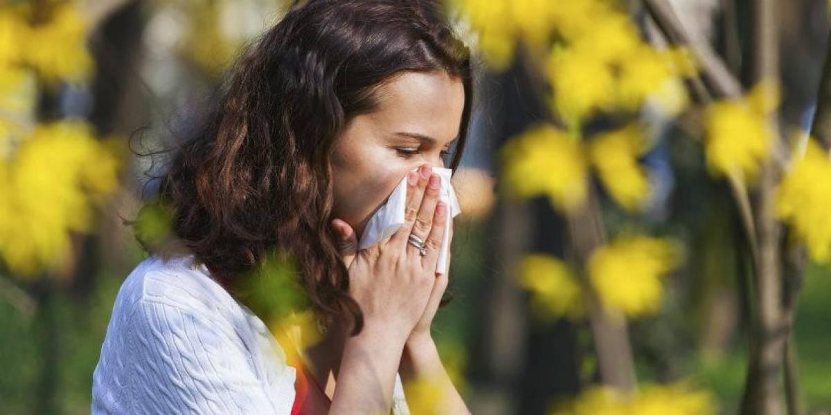 La aplicación de Google pronto podría mostrar el nivel de polen en tu zona