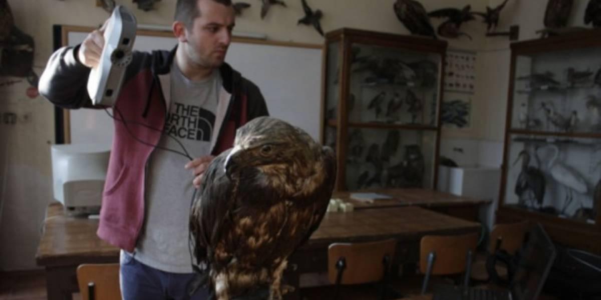 Compañías se unen para imprimir en 3D aves en peligro de extinción
