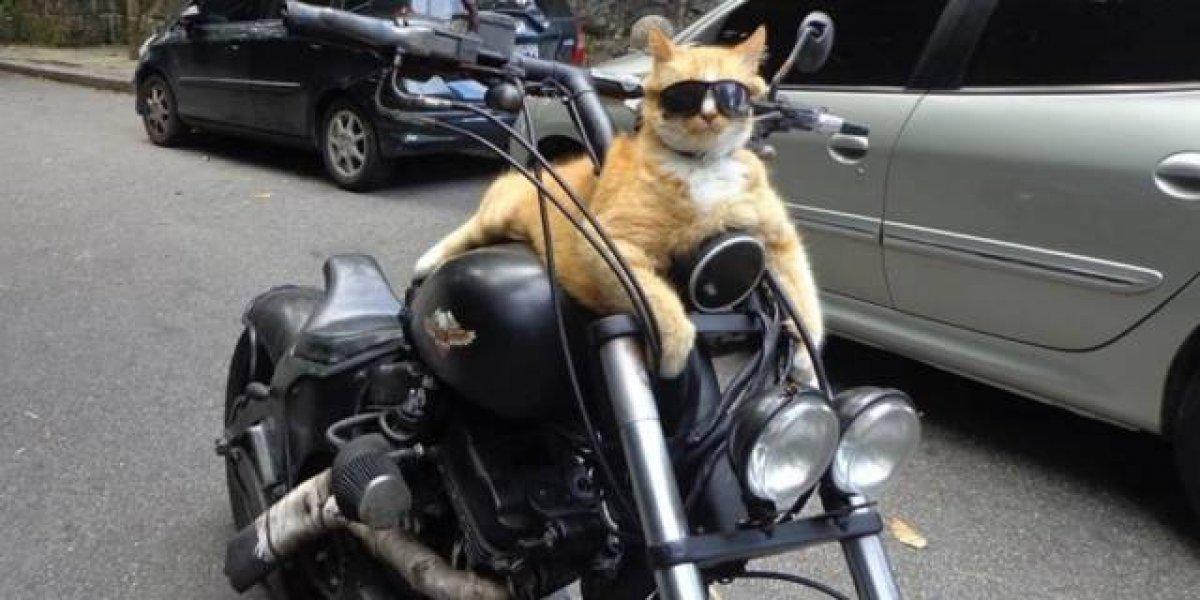 Conheça Chiquinho, o gato motoqueiro da Rocinha que viralizou