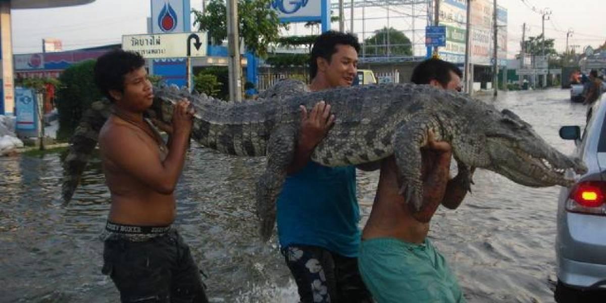 Problemas en Tailandia crecen por plagas de cocodrilos y serpientes