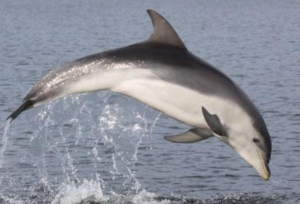 La llamativa relación entre la vida extraterrestre y los sonidos de un delfín