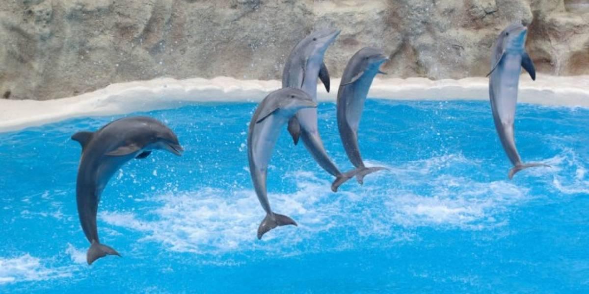 Un delfín poco fotogénico le robó un iPad a una mujer