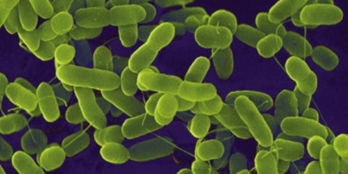 Científicos crean Logic Gates basados en bacterias
