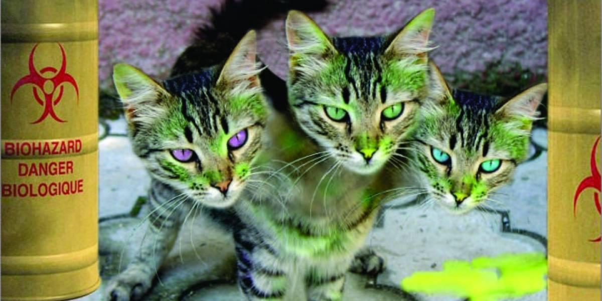 Poseer un gato puede anular la garantía de tu equipo HP