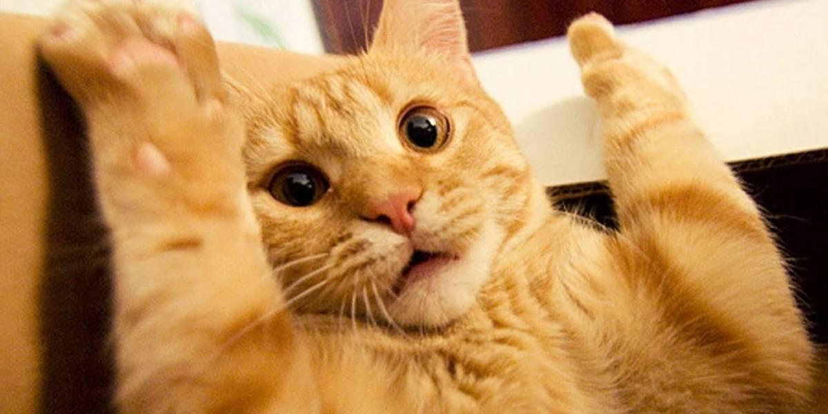 Coronavirus: gato se contagia de Covid-19 en Francia y piden a dueños de mascotas limitar contacto