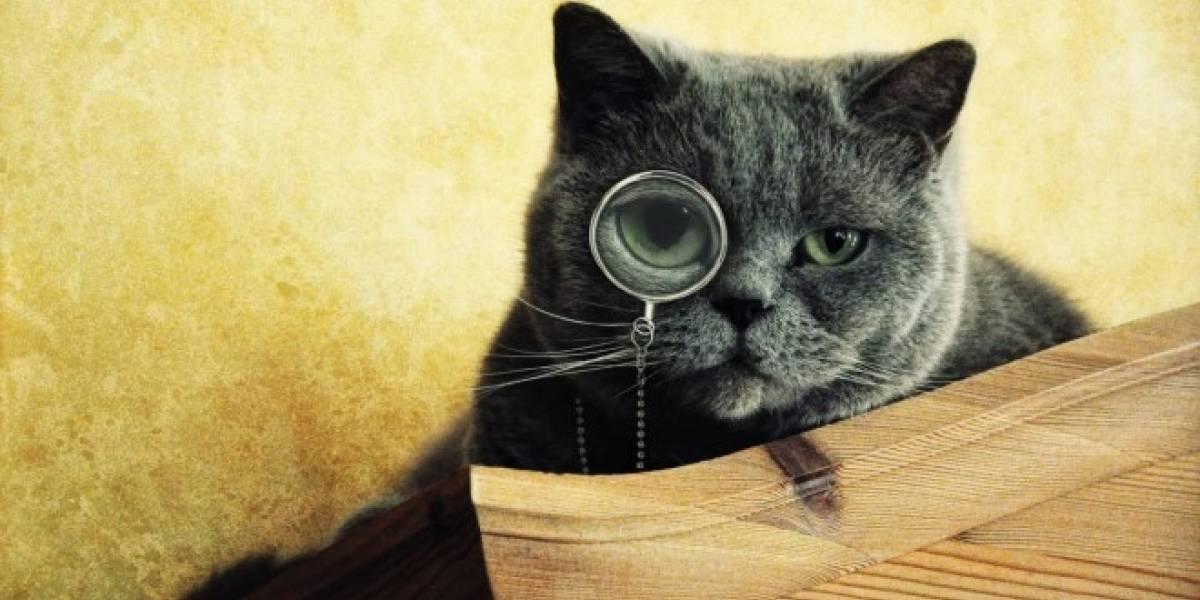 Gatos de casa saben reconocer sus nombres, señala estudio