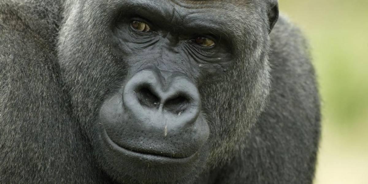 Gorilla Glass 5 en verdad quiere proteger tu teléfono de las caídas.