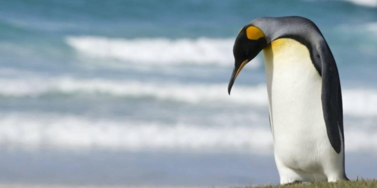 Descubren un troyano para Linux que toma capturas y graba audio