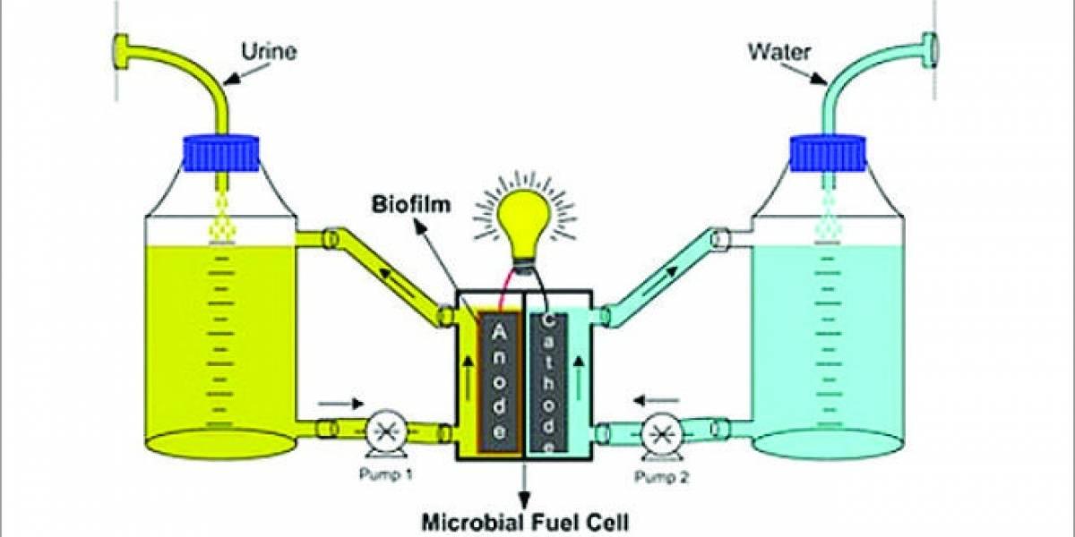 Investigadores convierten orina en Bio-combustible