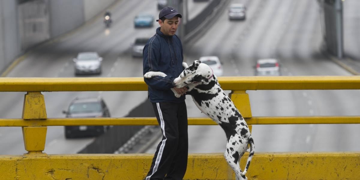 Así debes proteger a tu mascota del frío