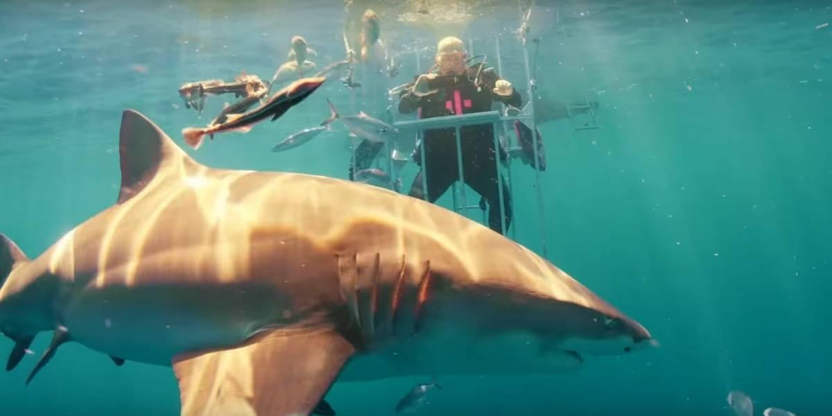 Hacen unboxing del Galaxy S8 bajo el agua... y rodeado de tiburones