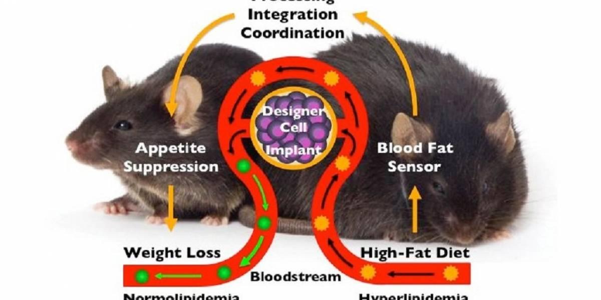 Desarrollan chip genético para implante que suprime el hambre